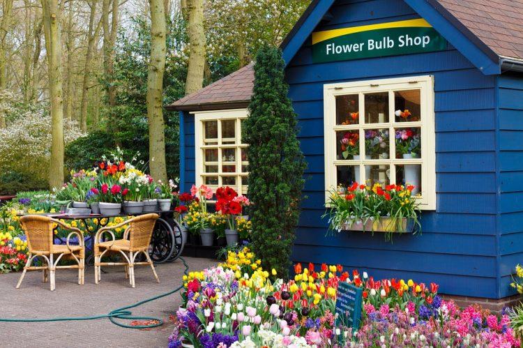 【オランダ】チューリップの楽園「キューケンホフ公園」時期は3月中旬から5月上旬、おすすめ風車