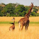 ケニア旅行のオリジナル海外オーダーメイドツアーは新婚旅行・ハネムーン計画の費用・予算をグラージュはお値打ちお見積もりします