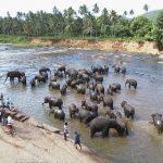 スリランカ旅行のオリジナル海外オーダーメイドツアーは新婚旅行・ハネムーン計画の費用・予算をグラージュはお値打ちお見積もりします