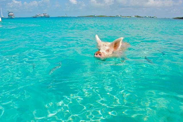 バハマ旅行のオリジナル海外オーダーメイドツアーは新婚旅行・ハネムーン計画の費用・予算をグラージュはお値打ちお見積もりします