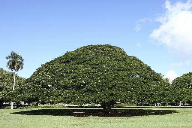 このきなんのきハワイ新婚旅行、ハワイハネムーンの費用と予算のことなら名古屋グラージュが見積りします