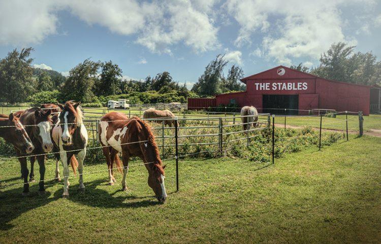 グラマラスヴォヤージュお勧め、世界の奇跡の 1 つタートル・ベイ・リゾートは乗馬のメッカ、オアフ島での乗馬なら間違いなくここタートルベイ| Turtle Bay Resortに泊まる旅、ノースショア旅行、オアフ旅行、ハワイ乗馬の旅の行き方,予算,費用は無料見積もりに自信の名古屋のオーダーメイド専門旅行会社グラージュへ