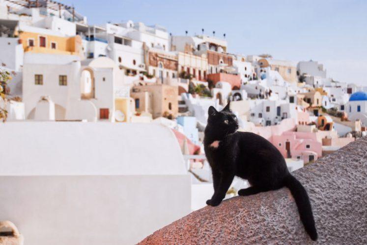 ひと気の少ないサントリーニ島で一人で満喫大好きな街並み景色に黒猫