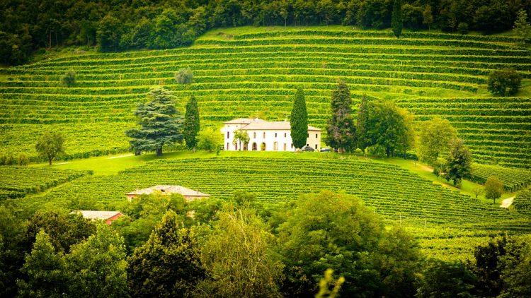 どれだけ飲んでも一人ならワイン飲み放題で絶景も独り占めできるひとり旅