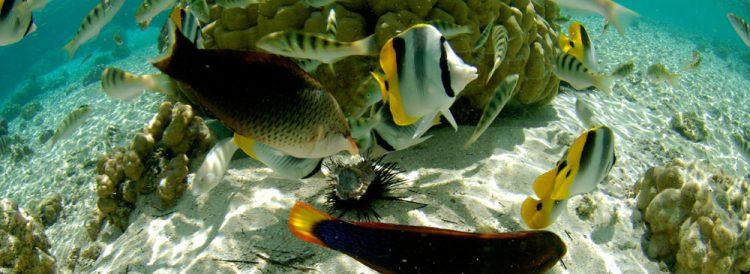 ル タハア アイランド リゾート&スパはモルディブより魚影が濃いことで有名