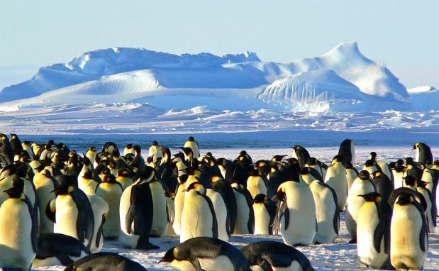 北極&南極おすすめモデルプラン|名古屋発 オーダーメイドツアー専門旅行会社